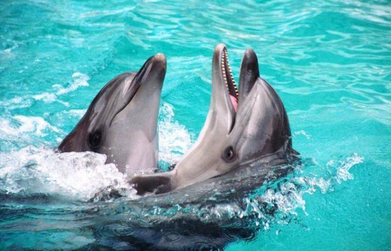 Выбираем лучший дельфинарий в Крыму