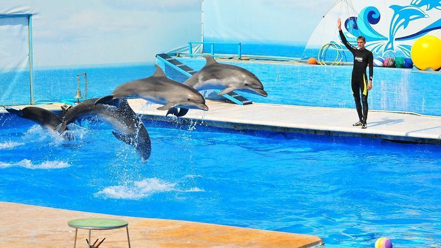 Дельфинарий в Казачьей бухте