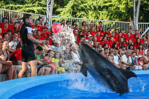 Алуштинский дельфинарий Акварель в Крыму