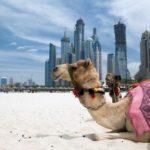 Туры в ОАЭ на двоих от 45 861 рублей: подбираем лучший вариант на ноябрь