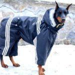 Особенности комбинезонов для собак