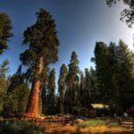 Уникальный Национальный американский парк Секвойя
