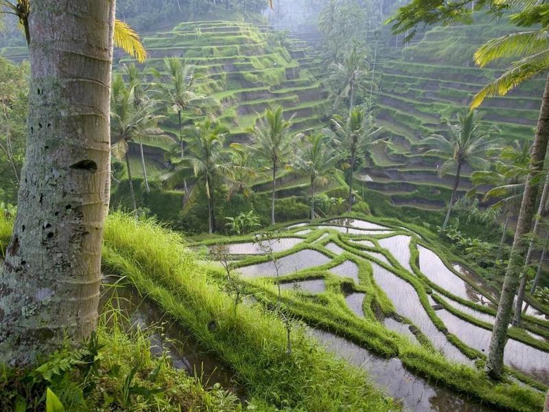 Аренда виллы на Бали главные преимущества