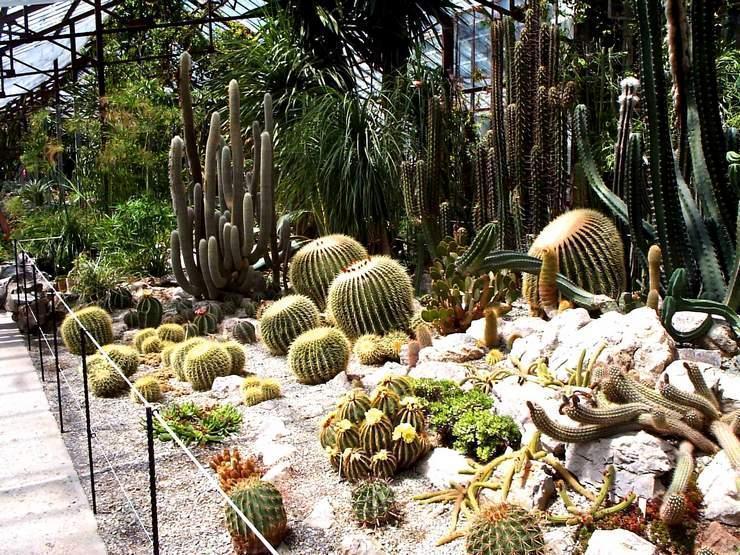 Растения Никитского ботанического сада
